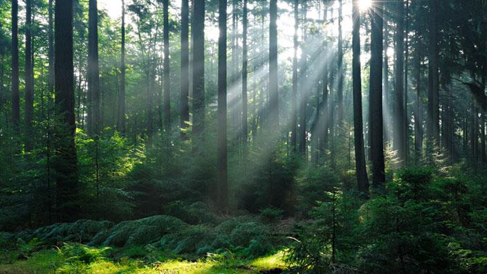 Skogsägare register